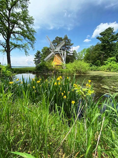Windmill with yellow iris
